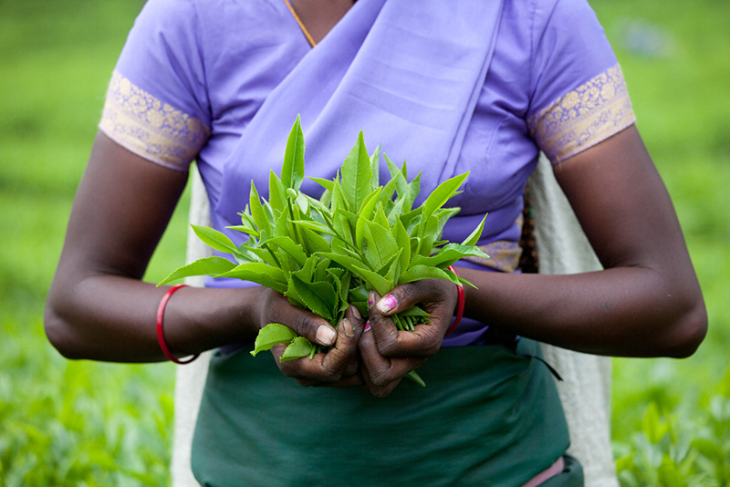 Woman holding tea leaves